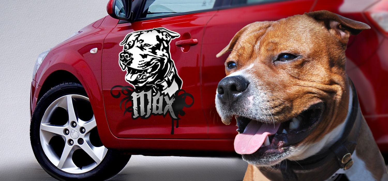 vektorová kresba psa podle fotografie stafordšírského bulteriéra, vznikla tak samolepka na auto