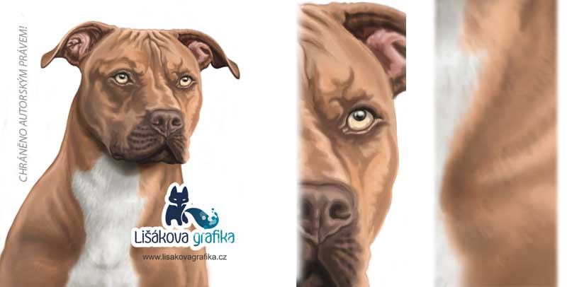 digitální kresba pitbulla